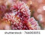 beautiful pink frozen flower... | Shutterstock . vector #766003051