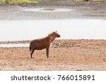 closeup of spotted hyena ... | Shutterstock . vector #766015891