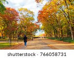 colorful trees lining up along...