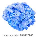 mop head hydrangea flower...   Shutterstock . vector #766062745