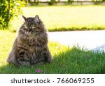 Little Cat On A Green With A...