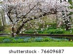 Blossom Apples Garden In The...