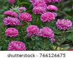 on the flowerbed in the autumn... | Shutterstock . vector #766126675