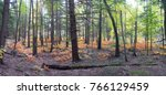 Small photo of Fall Ferns Afire Panorama
