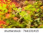 camouflaged green chameleon... | Shutterstock . vector #766131415