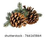 brown pine cone on white... | Shutterstock . vector #766165864
