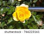 fully blown  award winning... | Shutterstock . vector #766223161