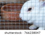 Stock photo rabbit in the zoo thailand 766238047