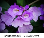 pachyptera hymenaea   hard wood ... | Shutterstock . vector #766310995