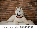 siberian husky puppy sitting on ... | Shutterstock . vector #766333351