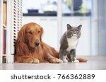 golden retriever and british... | Shutterstock . vector #766362889