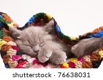 Stock photo sleeping kitten 76638031