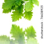 Green Oak Leaves With Water...