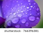 flower garden close up | Shutterstock . vector #766396381