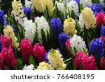 red  yellow  white  purple... | Shutterstock . vector #766408195