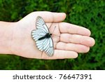 Butterfly with black stripes on ...