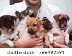 Stock photo young man holding puppies in his hands cute gog family together rescue animal concept 766492591