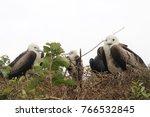 birds in isla de la plata ... | Shutterstock . vector #766532845