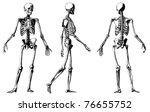 vector skeleton from atlas... | Shutterstock .eps vector #76655752