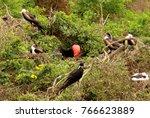 huge birds in isla de la plata  ... | Shutterstock . vector #766623889
