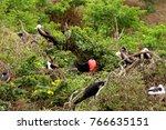 huge birds in isla de la plata  ... | Shutterstock . vector #766635151