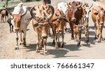 omo valley  ethiopia  ... | Shutterstock . vector #766661347