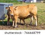 cow suckling calf | Shutterstock . vector #766668799