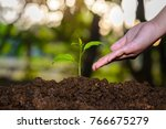the seedling are growing in the ...   Shutterstock . vector #766675279