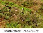 huge birds in isla de la plata  ... | Shutterstock . vector #766678279