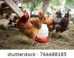 farmyard chickens and cocks... | Shutterstock . vector #766688185