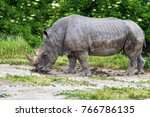 rhinoceros  ceratotherium simum ... | Shutterstock . vector #766786135