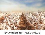beautiful cotton fields from... | Shutterstock . vector #766799671