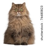 Stock photo persian cat years old in front of white background 76680823