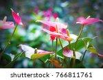 pink flamingo flower | Shutterstock . vector #766811761