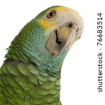 Small photo of Close-up of Yellow-shouldered Amazon, Amazona barbadensis, in front of white background