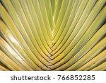 spread of the gleam tree   Shutterstock . vector #766852285