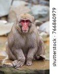 snow monkeys from jigokudani... | Shutterstock . vector #766860979