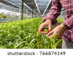 worker taking care of orchid... | Shutterstock . vector #766874149