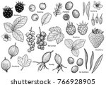 berry collection illustration ... | Shutterstock .eps vector #766928905