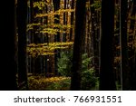 autumn leaves landscape | Shutterstock . vector #766931551