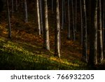 trees in a autumn forest | Shutterstock . vector #766932205