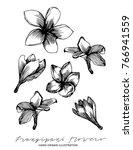 frangipani flowers hand drawn... | Shutterstock .eps vector #766941559
