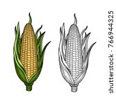 corn on the cob. hand drawn... | Shutterstock .eps vector #766944325