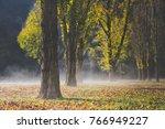 Poplars Trees With Autumn...
