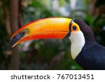 colorful tucan in the aviary | Shutterstock . vector #767013451