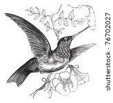 Ruby Throated Hummingbird Or...