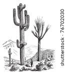 Saguaro Or Carnegiea Gigantea ...