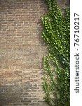 Creeper Plant On Bricks Wall ...