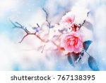 beautiful pink roses and...   Shutterstock . vector #767138395