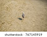 Seagull Walking Alone On The...